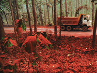 Government prohibits imports of red sanders wood