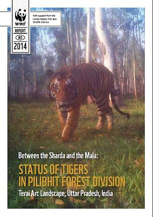 Between the Sharda and the Mala: status of tigers in Pilibhit Forest division
