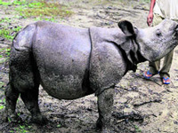 102 rhinos killed in India during the last three years