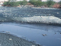 Goof-up: 'Ghaggar's polluted water causing Hepatitis C'