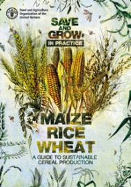 Save and grow in practice: maize, rice, wheat - a guide to sustainable cereal production