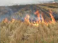 Impose heavy penalty for burning agricultural waste, says Economic Survey