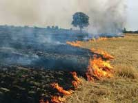 Stubble burning doubles Delhi pollution: Harvard study