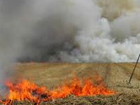 35 cases of wheat stubble burning in state so far