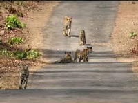 Night traffic banned in Kali Tiger Reserve