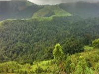 Conserve forests in Western Ghats