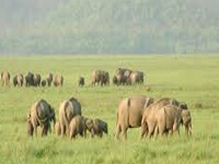 Greenpeace says govt stalling elephant reserve to aid mining